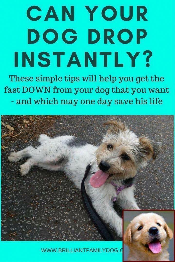 Joyful How To Stop Dog Aggression Go To My Blog Dog Behavior Problems Dog Behavior Dog Training