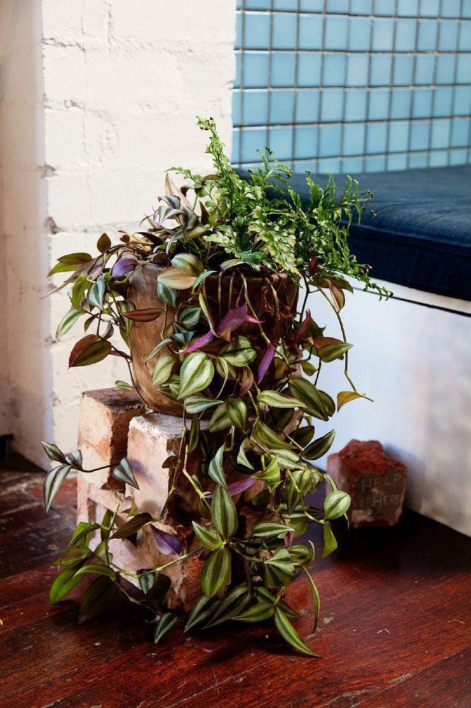 Традесканция: особенности ухода и 50+ лучших решений для декора комнаты или сада http://happymodern.ru/tradeskanciya-53-foto-chudesnoe-ukrashenie-dlya-komnaty-i-sada/ Разговорное прозвище – «бабьи сплетни», цветок получил за многочисленные ниспадающие побеги, которые красиво переплетаются между собой Смотри больше http://happymodern.ru/tradeskanciya-53-foto-chudesnoe-ukrashenie-dlya-komnaty-i-sada/