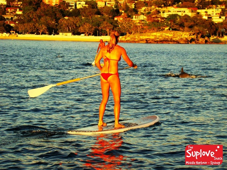 Candice Falzon Stand Up Paddle Boarding with some dolphins off Balmoral Beach, Mosman