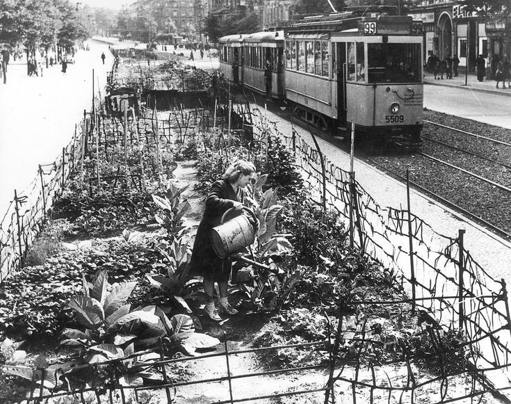 The Berlin Blockade led by the Soviet Union 24 June 1948 caused food shortages requiring the Berlin population to grow their own fruit and vegetables.