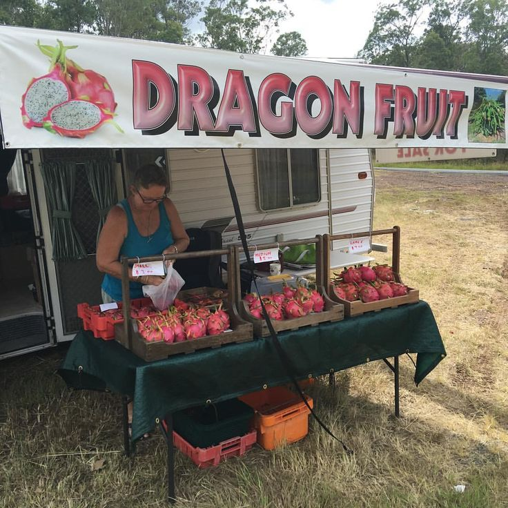 Grafton is a great place to grow Pearl dragon fruit. I have just been eating juicy & tangy pearl dragon fruit from this lovely roadside store. Yum! #dragonfruit #pearldragonfruit #cactus #gardeningaustralia #daleysfruit