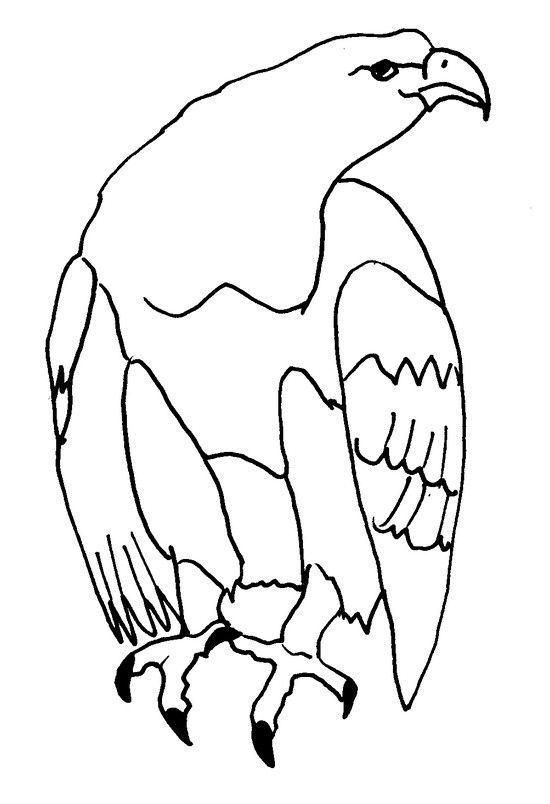 Coloriage Animaux à Colorier Dessin à Imprimer Birds Coloring