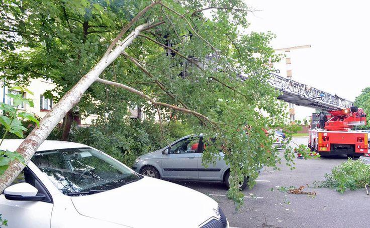 Bouřky vyvracely stromy, vlaky i auta mají problémy– Novinky.cz