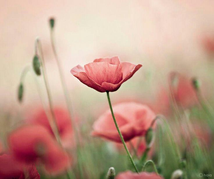 Cantares 1:16 He aquí que tú eres hermoso, amado mío, y dulce; Nuestro lecho es de flores.