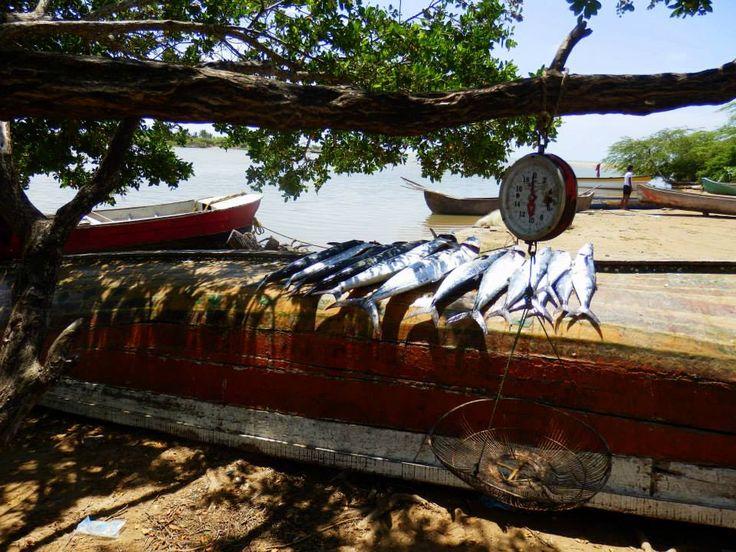 Fish @ La Guajira