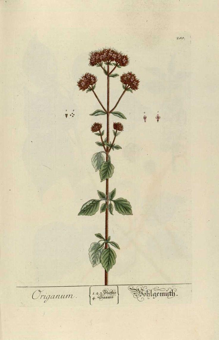 30 best images about herbarios antiguos on pinterest for Cocina mediterranea
