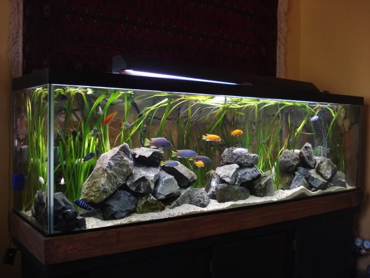 Kind of similar to our tank. Gabe could change the rocks like this when we buy more fish