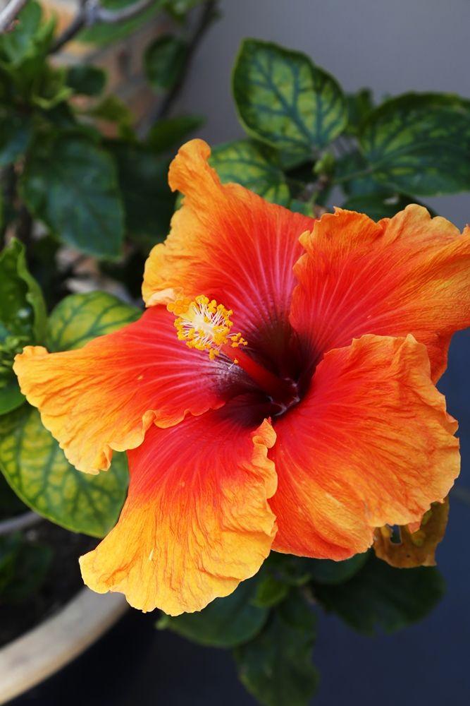 Chiappini Street: Flowers.  FIREFLYvillas, Hermanus, 7200 @fireflyvillas ,bookings@fireflyvillas.com,  #ChiappiniStreet #FIREFLYvillas #HermanusAccommodation