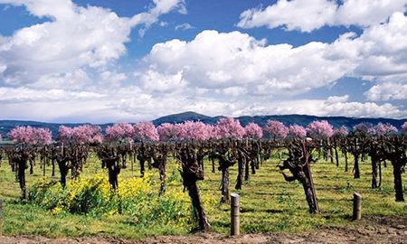 5 Top Wine Styles For Spring http://www.vintecclub.com.au/5-top-wine-styles-for-spring/