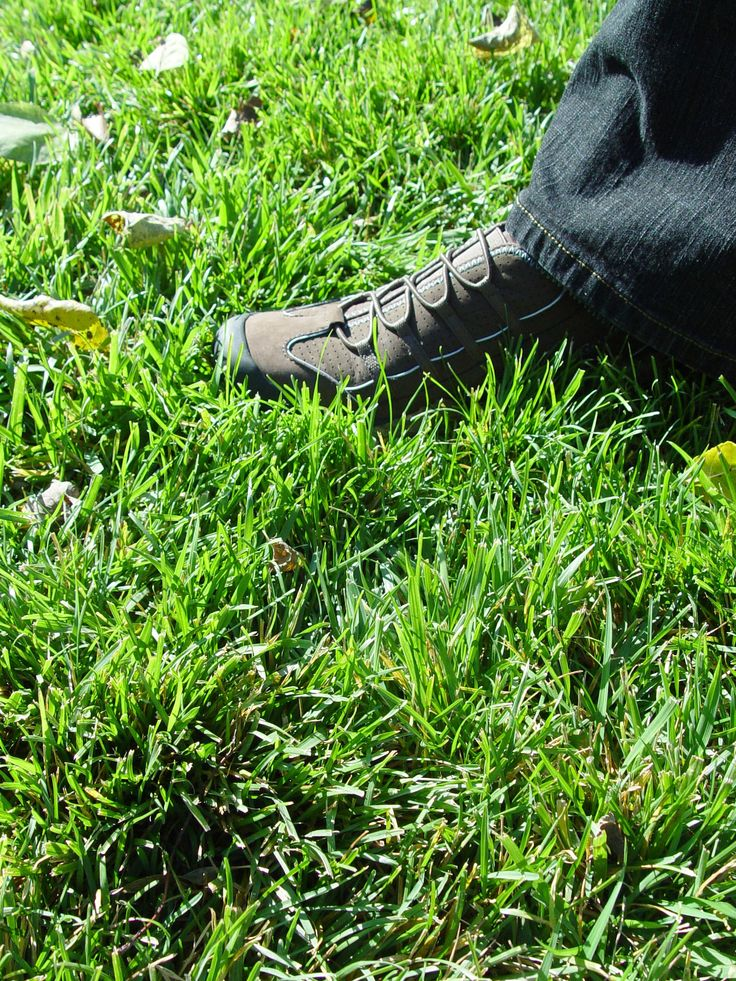 Great article on grass seed, what type to buy, where to get it, and how to care for it and your yard