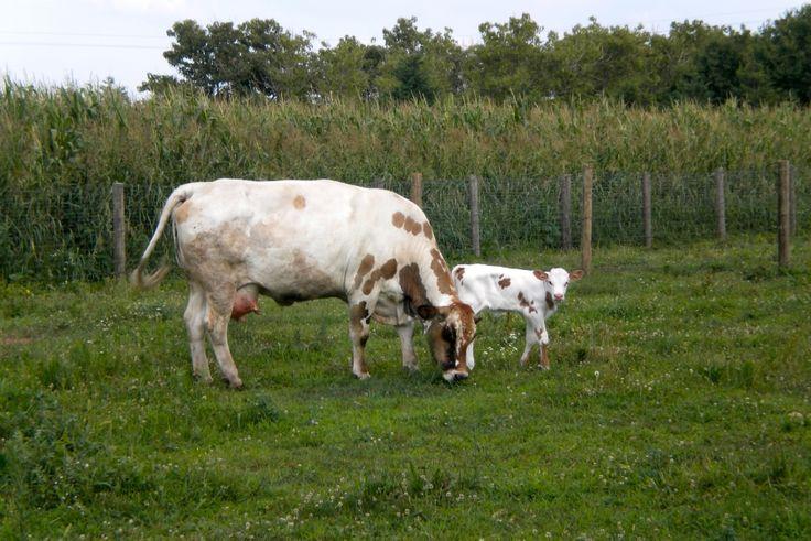 Erfahren Sie Näheres über den Bauernhof Il Magicorto. Er befindet sich in Ebene in Cassola -  (Vicenza), bietet Nur Übernachtung in Wohnung - Cassola - .