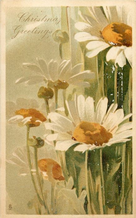 CHRISTMAS GREETINGS  daisies with orange centres
