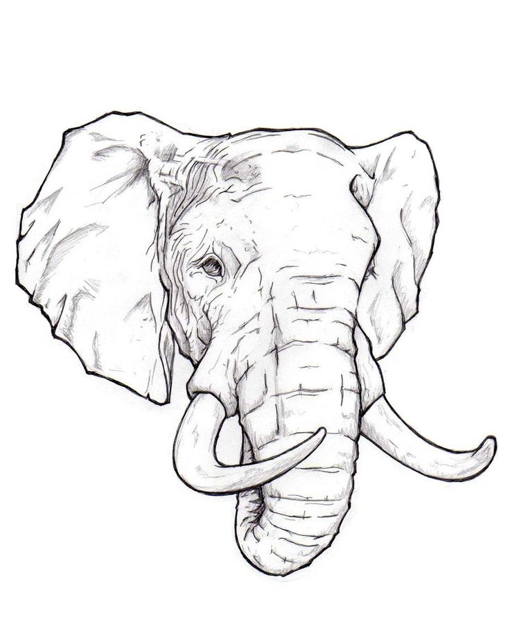 indian elephant outline drawing