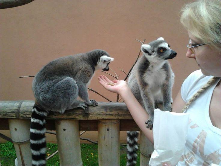 Nyíregyházi Állatkert3