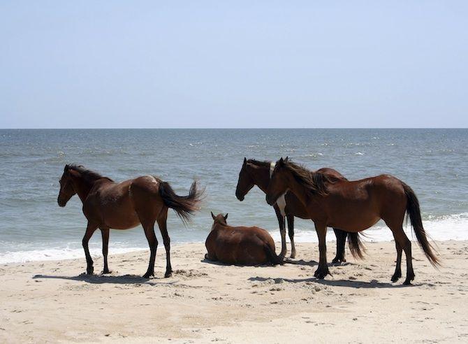 In beeld: wilde paarden - Reizen - KnackWeekend.be