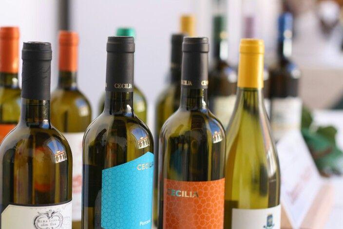 Festa dell'Aleatico Passito all'isola d'Elba. #isoladelba #wine