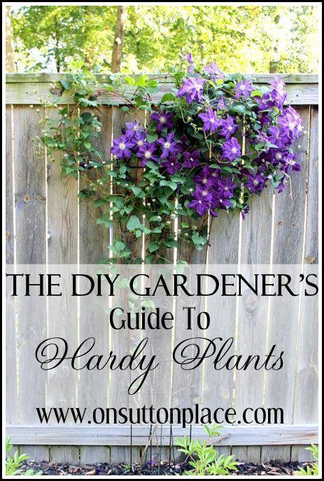 16 best bird feeders images on pinterest bird feeders for Canadian gardening tips