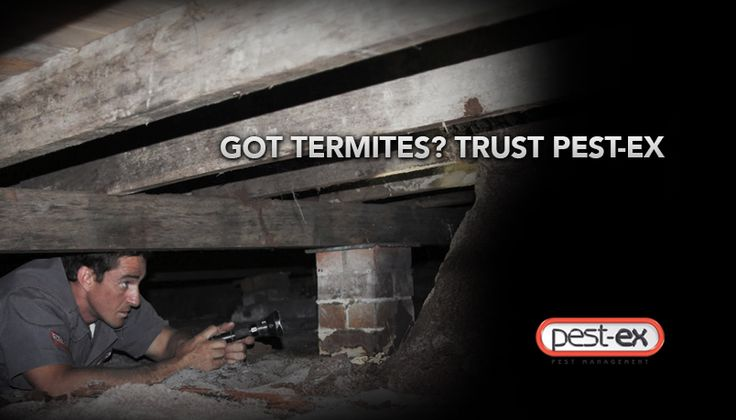 Hire Termite Professionals to effectively control termites, you would need the services of a professional Termite Control in Gold Coast. Pest-Ex has a team of highly trained executives with years of experience in this field.