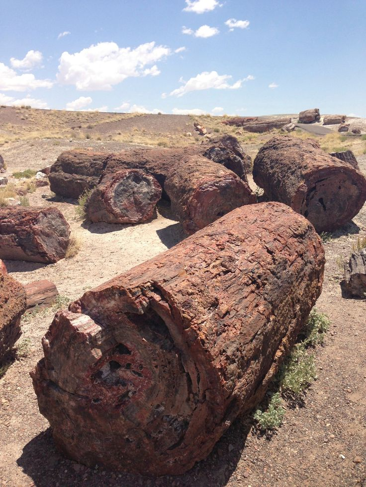 Stone tree logs, Petrified Forest National Park, Arizona