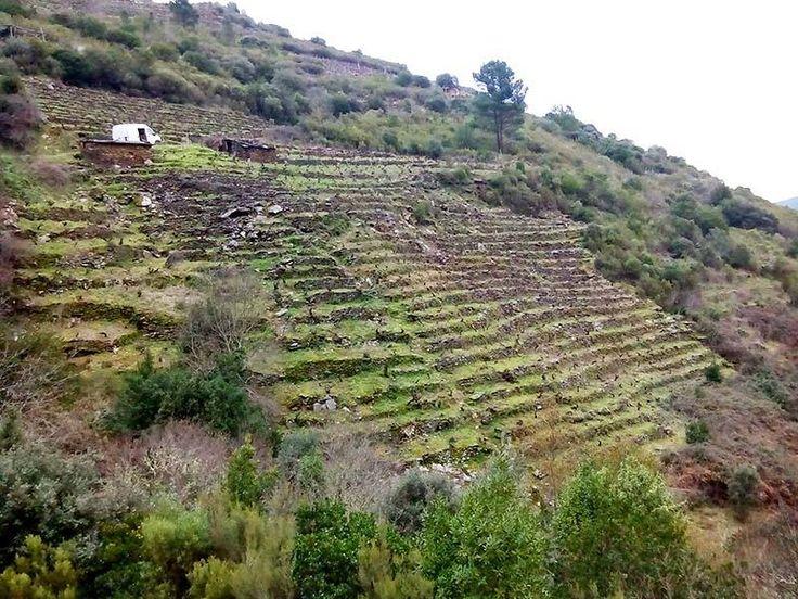 Viña Leirato en la Ribeira Val do Frade, Vilachá de Salvadur (Ribeira Sacra) Viña de cepas muy antiguas de mencía, garnacha y algo de albarello. Tiene una superficie aproxima de media hectárea y con una inclinación que va desde un 47,4% en la parte de arriba y de un 60% y hasta un 70% de inclinación en la parte baja de la viña. Altitud: 260 m. Antigüedad: + de 50 años.