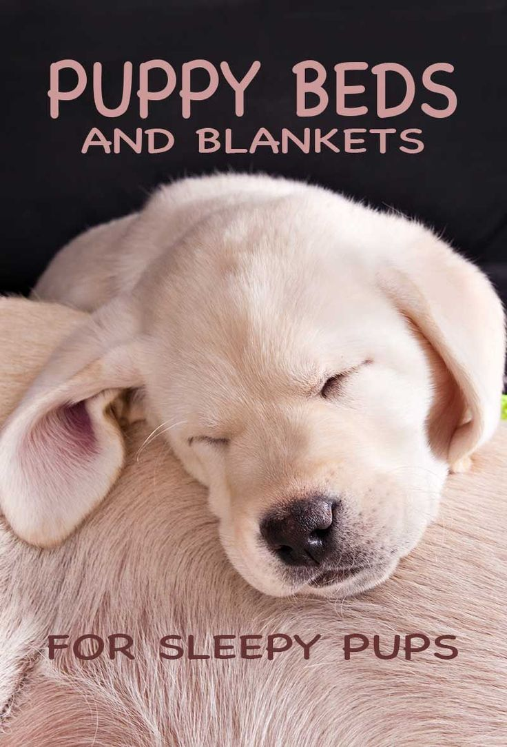Puppy Beds And Blankets - A Collection From The Labrador Site #PuppyBeds