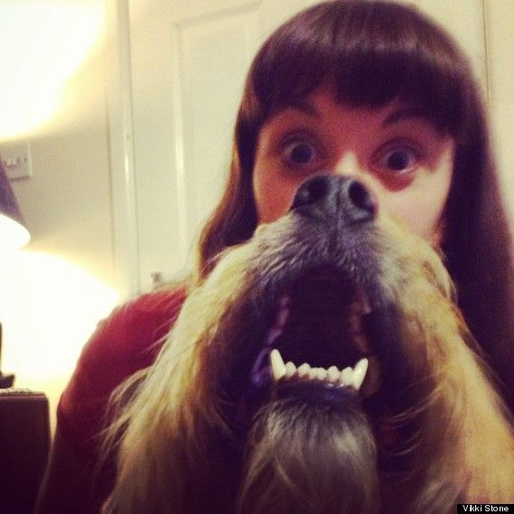 Cat Beard images | Dog Beards: Pet Owners Fight The Cat Beard Trend (PICTURES)
