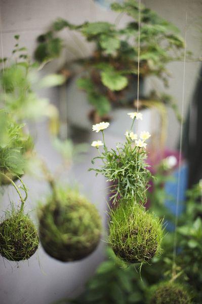 STRING GARDENS inspiration  string garden fedor