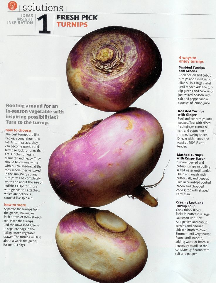 turnip info - how to store. good info since turnips are going into our fall garden this year
