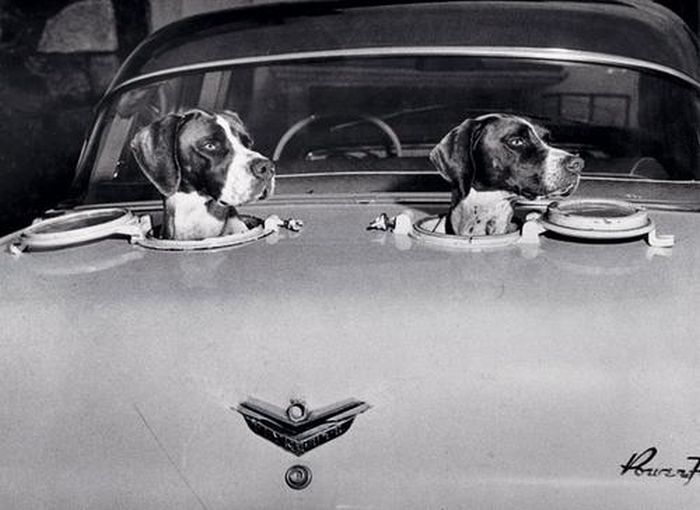 Car portholes for dogs…