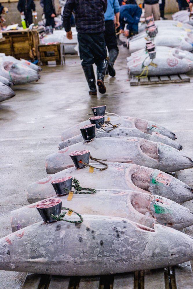 7 THINGS TO KNOW BEFORE VISITING TSUKIJI FISH MARKET | 7 THINGS TO KNOW BEFORE VISITING TSUKIJI FISH MARKET| TSUKIJI FISH MARKET| Guide to visiting Tsukiji fish market in Japan | sushi at TSUKIJI FISH MARKET | Tuna Auction at TSUKIJI FISH MARKET | Tuna Auction | guide to TSUKIJI FISH MARKET| TSUKIJI FISH MARKET Tokyo | TSUKIJI FISH MARKET photography | TSUKIJI FISH MARKET restaurant | (Jōgai-shijō | Jōnai-shijō tsukiji market| tuna auction tokyo