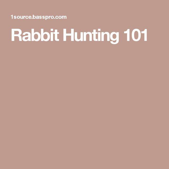 Rabbit Hunting 101