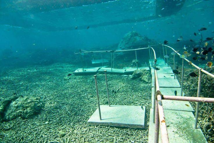 Peduli dengan masa depan lingkungan tempat kita melancong? Ini situasi salah satu area ponton kapal di tengah laut kawasan #lembongan.  Nyemplung jalan di bawah laut kasi makan ikan dan terumbu karang sekitarnya hancur.  Ada juga temuan beton2 pengikat jangkar/ponton meluluhlantakkan koral karena terseret arus.  Rumah para ikan rusak kita menghancurkan hanya untuk nikmat sendiri.  Padahal perlu puluhan tahun serumpun karang untuk tumbuh. Koral rusak ikan hilang dan kapal tinggal mencari…