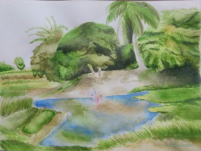#watercolor #rice #crop #paddy #agriculture #india #green #cultivation #instaart #fabercastell #aquarelle #art