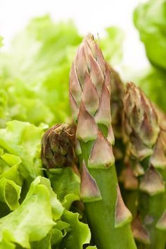 Asparagus Companion Plants: What Grows Well With Asparagus - Asparagus plant companions are plants that have a symbiotic relationship, one that is mutually beneficial to each. In the following article, we will discuss the benefits of companion planting with asparagus and what grows well with asparagus.