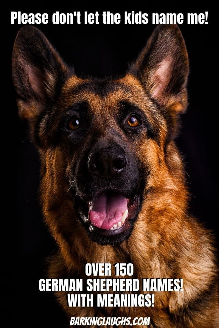 The Best Dog Names For German Shepherds In 2020