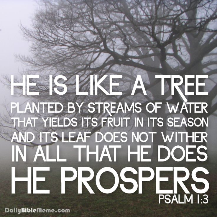 Psalm 1 | Daily Bible Meme
