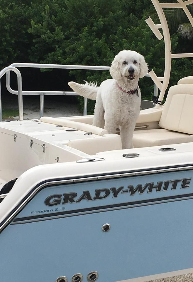 February 20th is National Love Your Pet Day, so we thought we'd share with you our favorite furry friend, Gnarly. Which furry friends have stolen your heart?