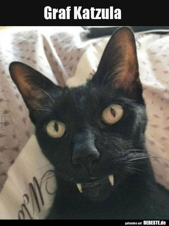 graf katzula lustige bilder spr che witze echt lustig animals seltene katzen lustige