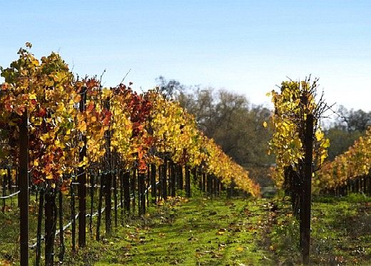 Sonoma, CA Wine Country