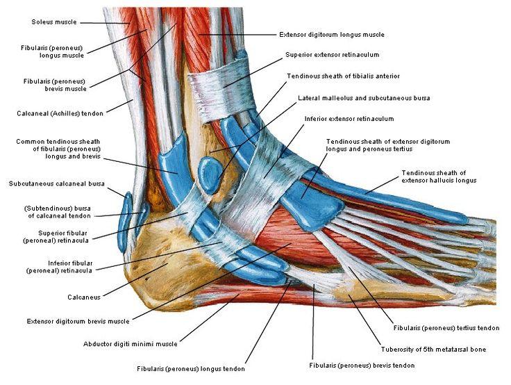 Hardlopen, trainingsmethoden: nuttig bezoekje aan fysio