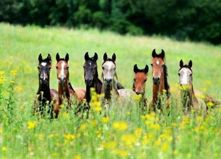Have a great day! (not my photo) #EECustomHorseShoes