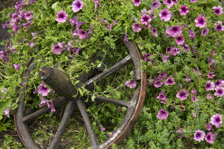 1000+ images about Petunias on Pinterest | Planters, Hummingbirds and ...