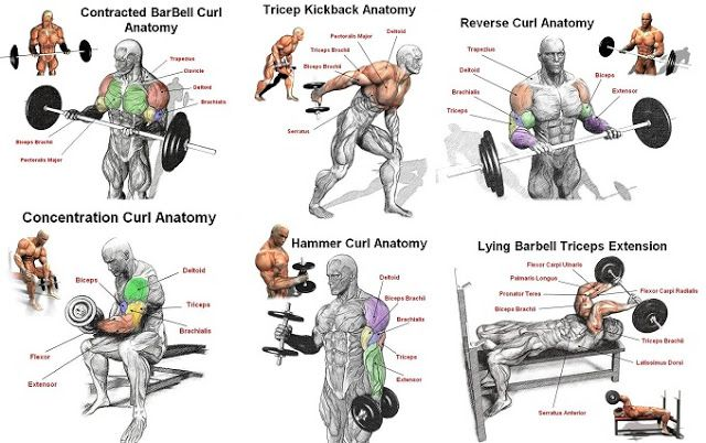 1000+ ideas about Arm Workout For Mass on Pinterest ...