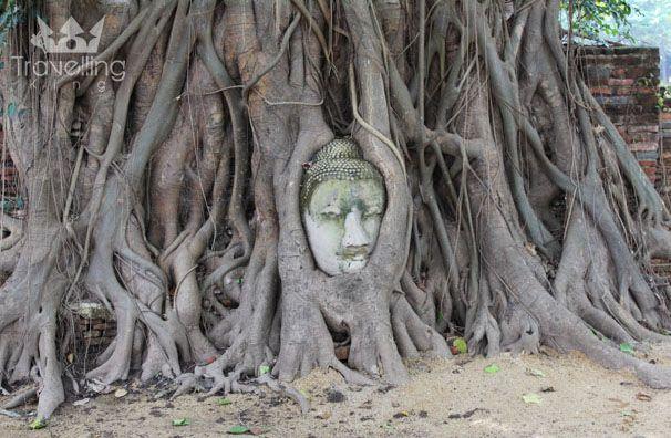 Buddha Head - Ayutthaya Kingdom  The Ancient Capital of Bangkok (PHOTO BLOG)