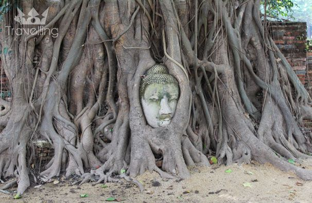 Buddha Head - Ayutthaya Kingdom  The Ancient Capital of Bangkok (PHOTO BLOG)