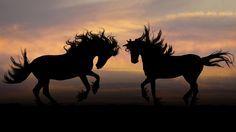 Horse 4K Ultra HD Wallpaper  | Horse Silhouettes HD Wallpapers. 4K Wallpapers