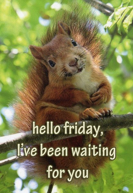 Image result for happy friday squirrel images