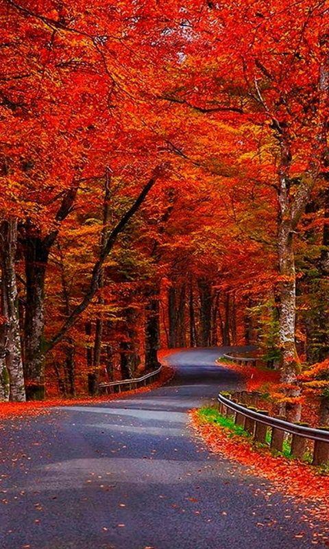 Autumn Leaves Wallpaper  WallDevil