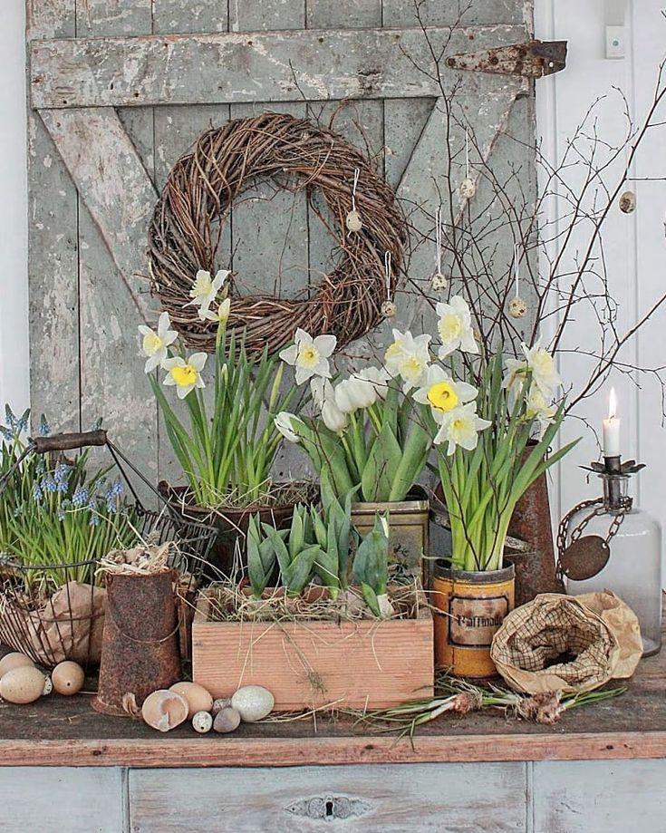 Pin af MR Geller på Daffodils and Pansies Haven