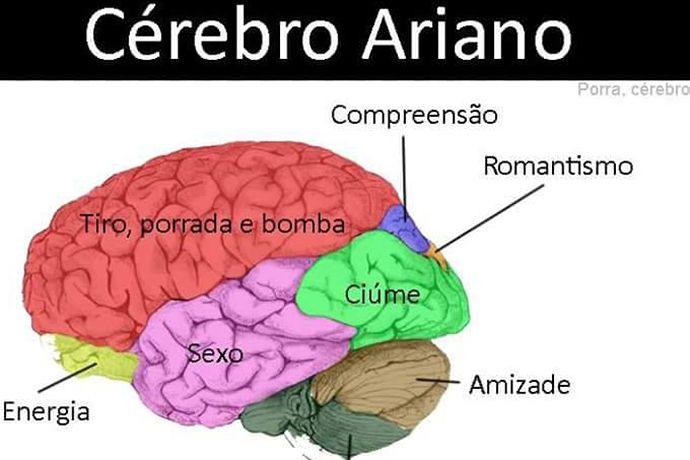 signo_cerebro1